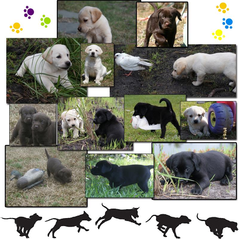 puppies_mosaic3